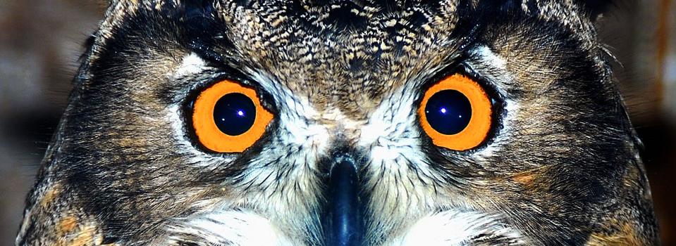owl_sarton3
